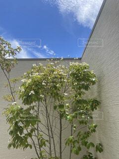 木に花の花瓶の写真・画像素材[4573160]
