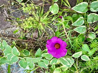 花園のクローズアップの写真・画像素材[4577650]