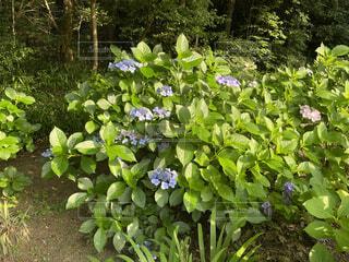庭の緑の植物の写真・画像素材[4600327]