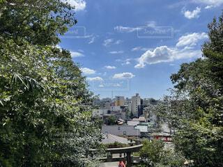 都市公園の木の写真・画像素材[4872022]
