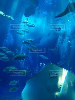 水の下で泳ぐ魚の写真・画像素材[4408622]