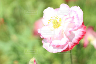 花の写真・画像素材[614235]