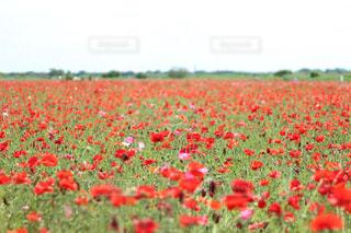 花の写真・画像素材[614237]