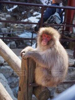 木の塀の上に座っている猫の写真・画像素材[4416513]