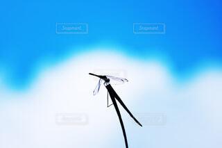 秋の使者。ゆらぐ空。の写真・画像素材[4409141]