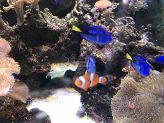 熱帯魚の写真・画像素材[4419787]