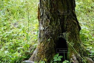森の中の木の写真・画像素材[4442185]