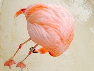 鳥の写真・画像素材[201856]
