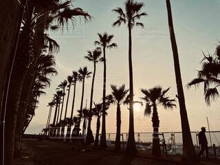 ヤシの木と太陽の写真・画像素材[4409703]