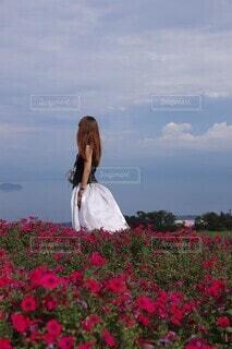 青空とお花畑の写真・画像素材[4416439]