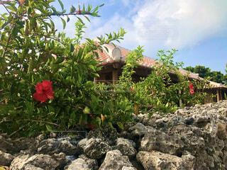 沖縄の家の写真・画像素材[4413247]