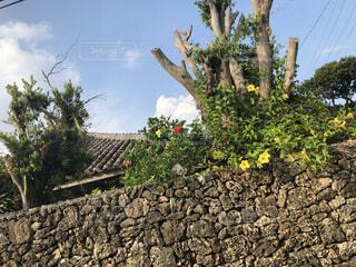 石垣島の家の写真・画像素材[4413240]