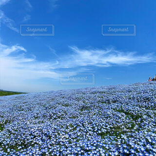 透き通った青の写真・画像素材[4413551]