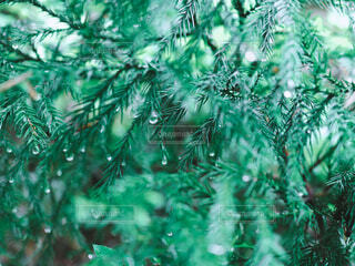 梅雨 草木 雨の写真・画像素材[4415252]