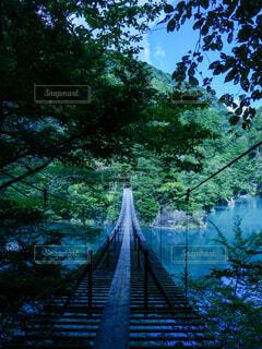静岡県寸又峡の吊り橋の写真・画像素材[4632778]