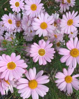 花の写真・画像素材[189247]