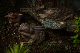元興寺のかえる石の写真・画像素材[4813120]