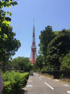 東京タワーの写真・画像素材[4420826]