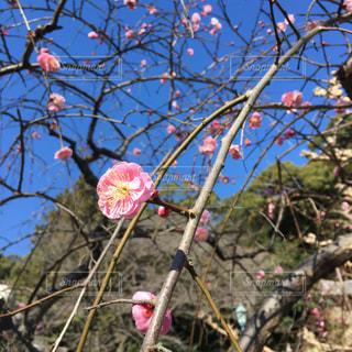 花の写真・画像素材[331302]