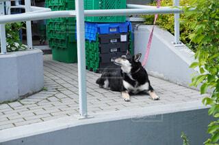 主人を待つ犬の写真・画像素材[4423930]