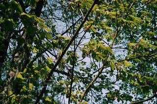 ポーランドの変わった葉の写真・画像素材[4434290]