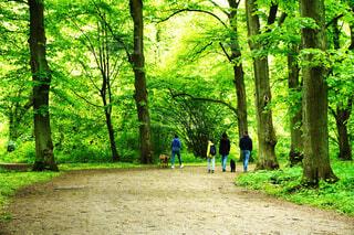 森林の中で散歩する人々の写真・画像素材[4444432]