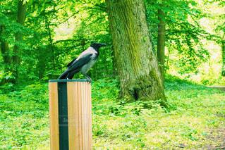 新緑の中の鳥の写真・画像素材[4444437]