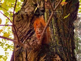 ワルシャワの公園にいた木の上のリスの写真・画像素材[4452654]