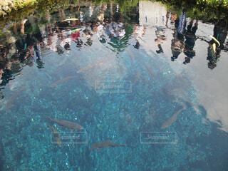 忍野八海湧水に映る人の写真・画像素材[4424319]