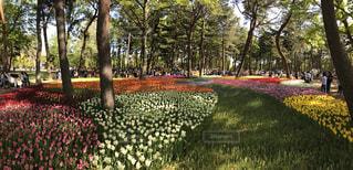 花畑の写真・画像素材[611489]