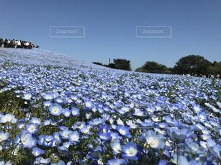 花畑の写真・画像素材[611514]