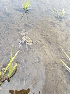 砂の中に立っている鳥の写真・画像素材[4568036]