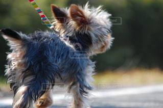 犬の写真・画像素材[189742]