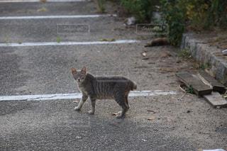 こっちらを見る野良猫の写真・画像素材[1226968]