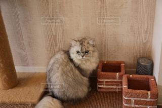 何かを見つめる猫の写真・画像素材[1636937]