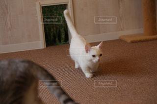 何かに近づく猫の写真・画像素材[1636956]