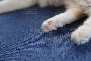 寝ている猫の肉球が可愛すぎて…の写真・画像素材[1639735]