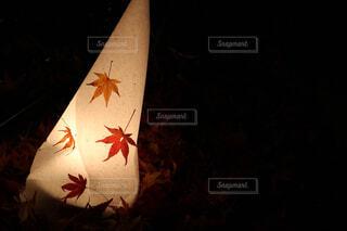 紅葉の燈篭。の写真・画像素材[4437051]