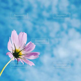 花の写真・画像素材[209048]