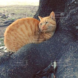 猫の写真・画像素材[334679]
