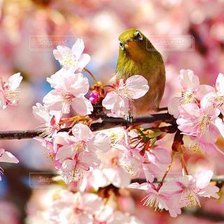 桜 - No.334682