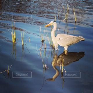 鳥の写真・画像素材[429755]