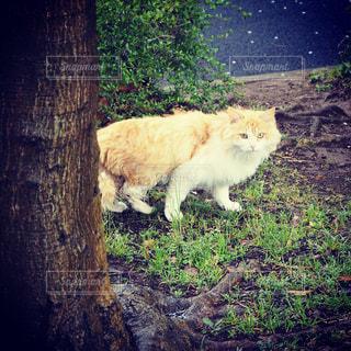 動物の写真・画像素材[429757]
