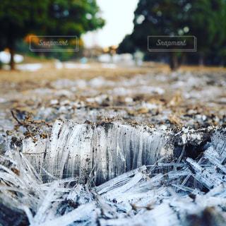 霜柱の写真・画像素材[982477]