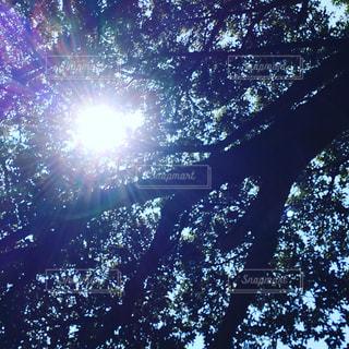 木漏れ日の写真・画像素材[1365112]