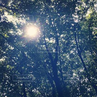 木漏れ日の写真・画像素材[1365125]
