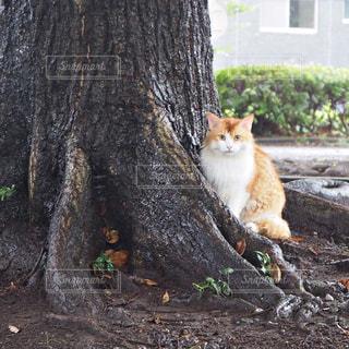 猫の雨宿りの写真・画像素材[1592316]