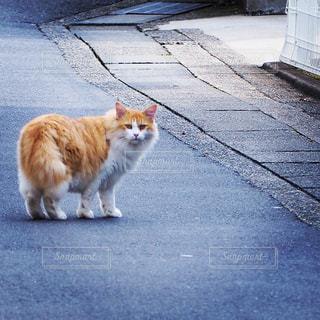 猫の写真・画像素材[1592318]