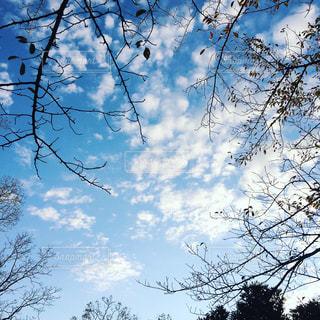 冬空の写真・画像素材[1592321]