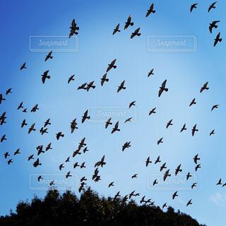 空を飛んでいる鳩の群れの写真・画像素材[1750571]